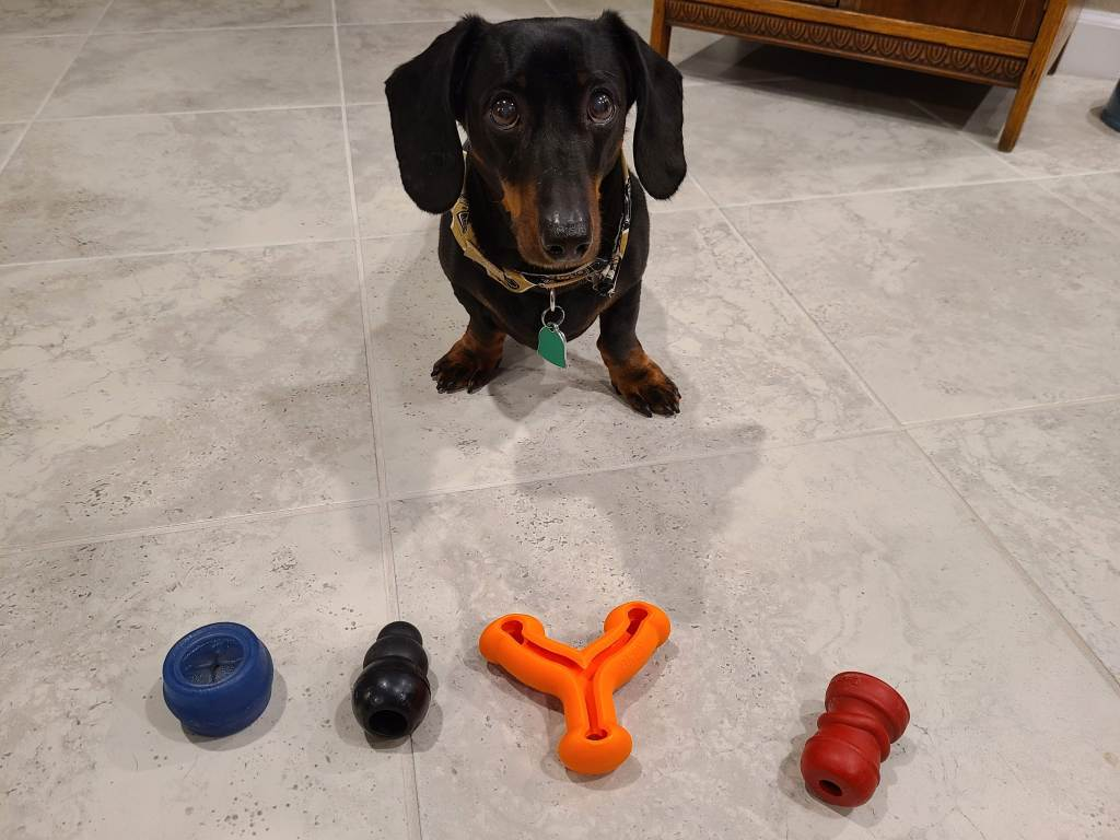 Dog waiting to eat treats from four toys in front of him